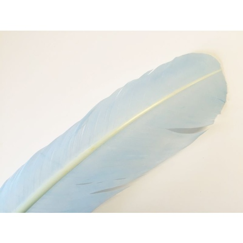 Wing Feather - Blue