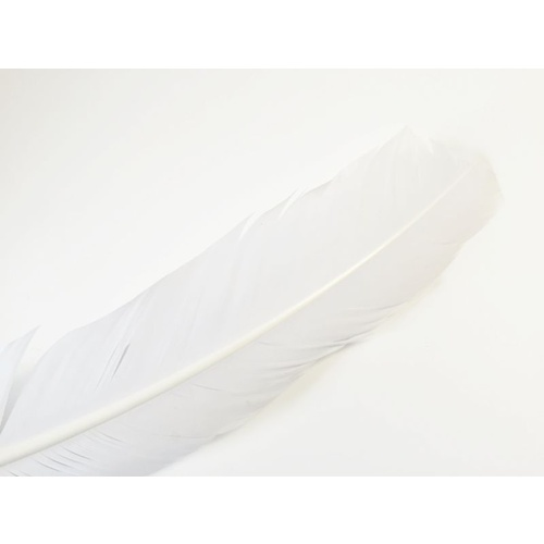Wing Feather - White